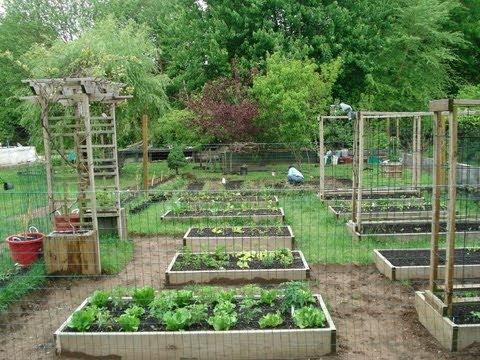 Backyard Organic Gardening Ideas - How My Dad Transformed My Mom's .