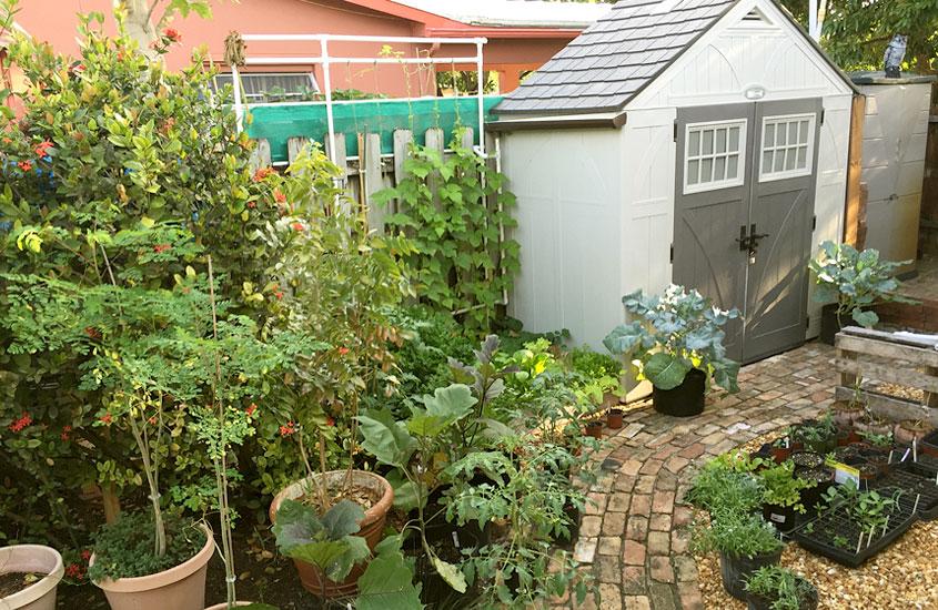 Backyard Edible Garden Design Urban Farming Institu