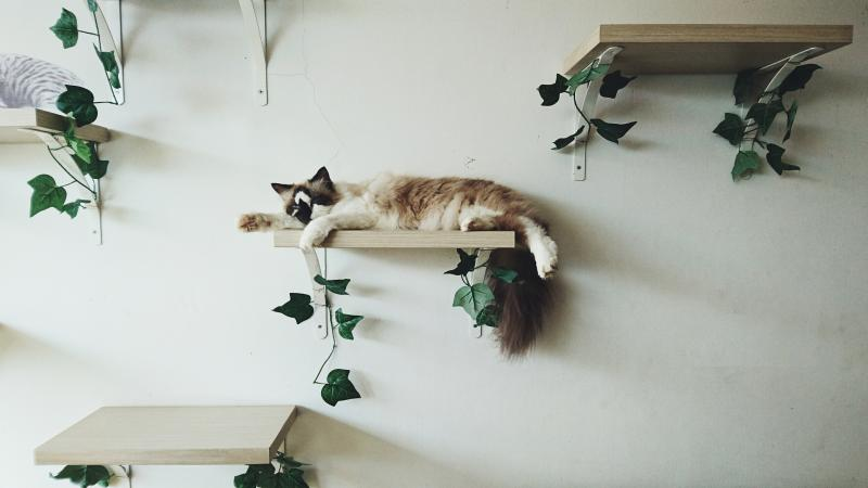 Options for Cat Wall Shelves and Perches | LoveToKn