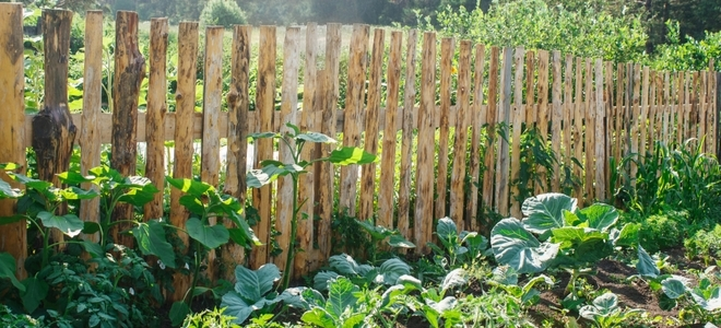 How to Build a Vegetable Garden Fence | DoItYourself.c