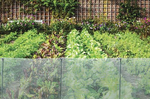Volm 2' x 25' Garden Net Fence at Menards