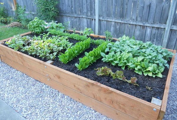 Veggie Garden - Why You Should Start One | Raised garden planters .
