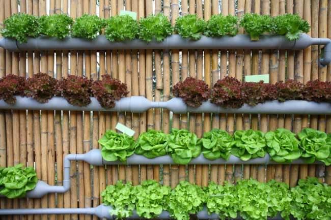 PVC Gutters Recycled into Planters • Gutter Garden • 1001 Garde