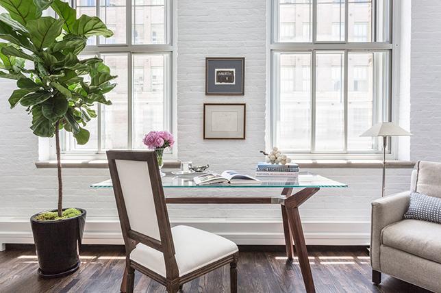 contemporary living room ideas plants