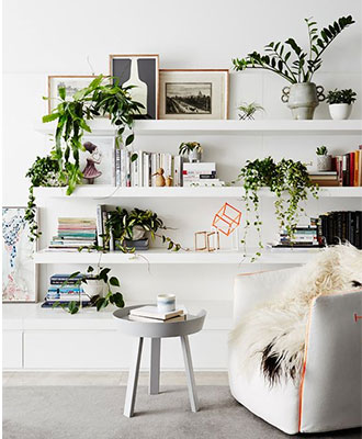 Plants wall decor ideas
