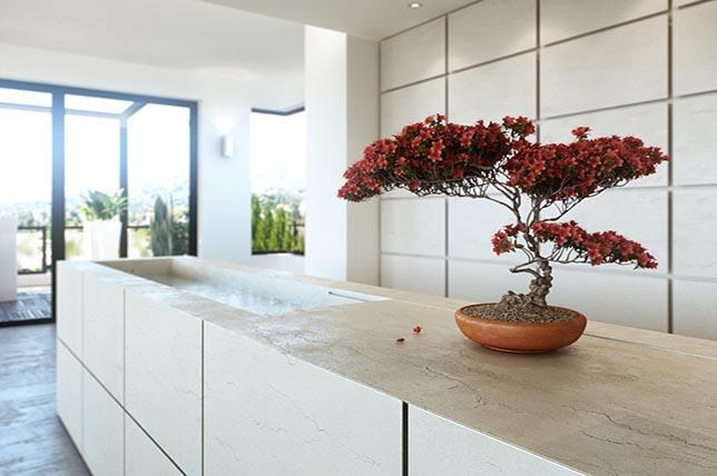 Interior design wellness plants