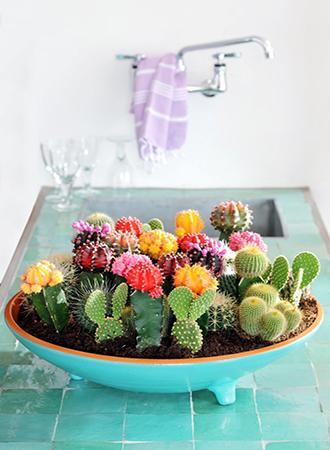 Cactus arrangement pinterest home decor trends 2019