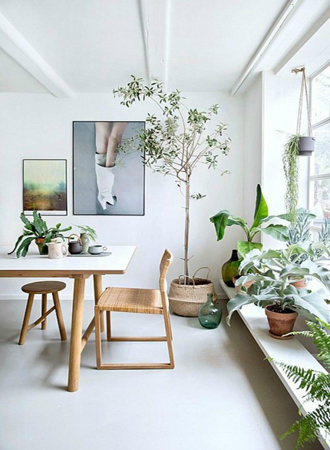 Plant room refresh ideas 2019