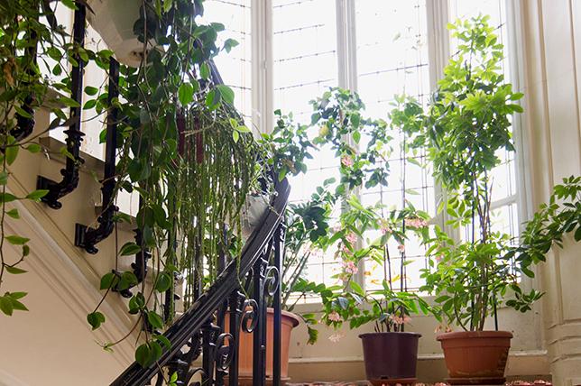 Plants stairwell ideas