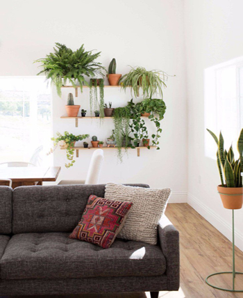 Wall plants living room wall decor ideas