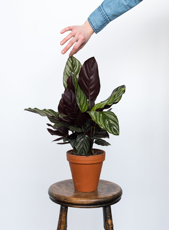 best easy care for houseplant