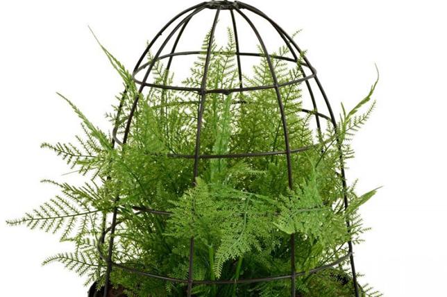 best modern house plant idea