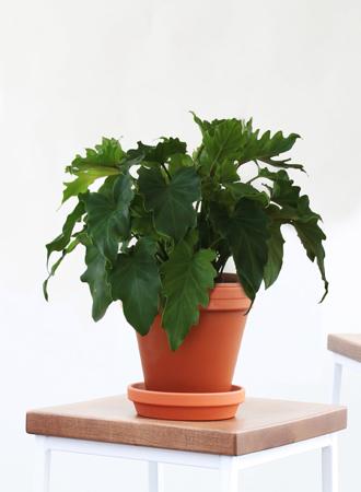 Stylish houseplants