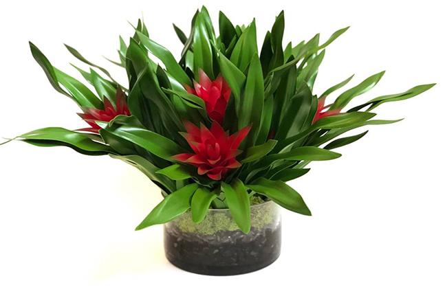 Bromeliad house plants