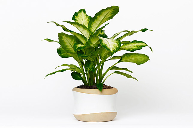 best houseplants