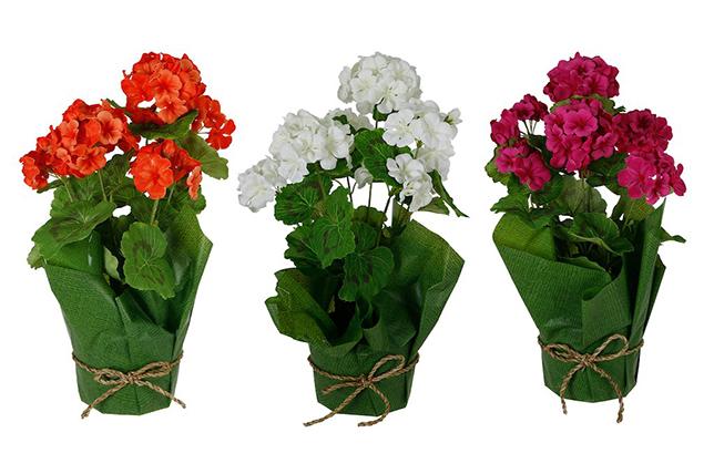 Begonia bathroom flowers