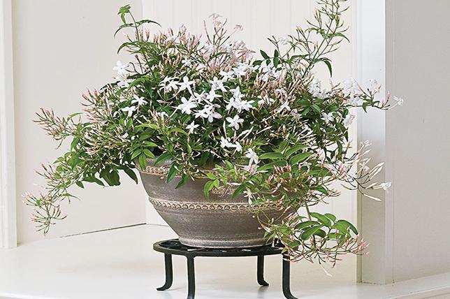 Bathroom flowers jasmine