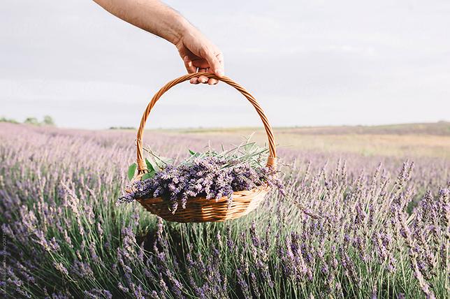 Bathroom flowers lavender