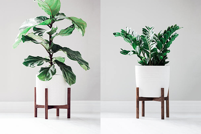 modern plant decor trend