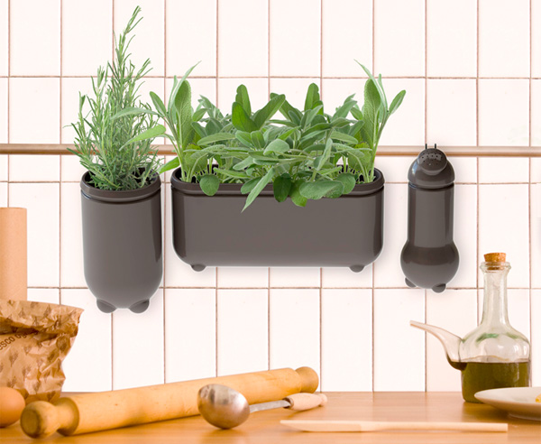 Houseplants kitchen