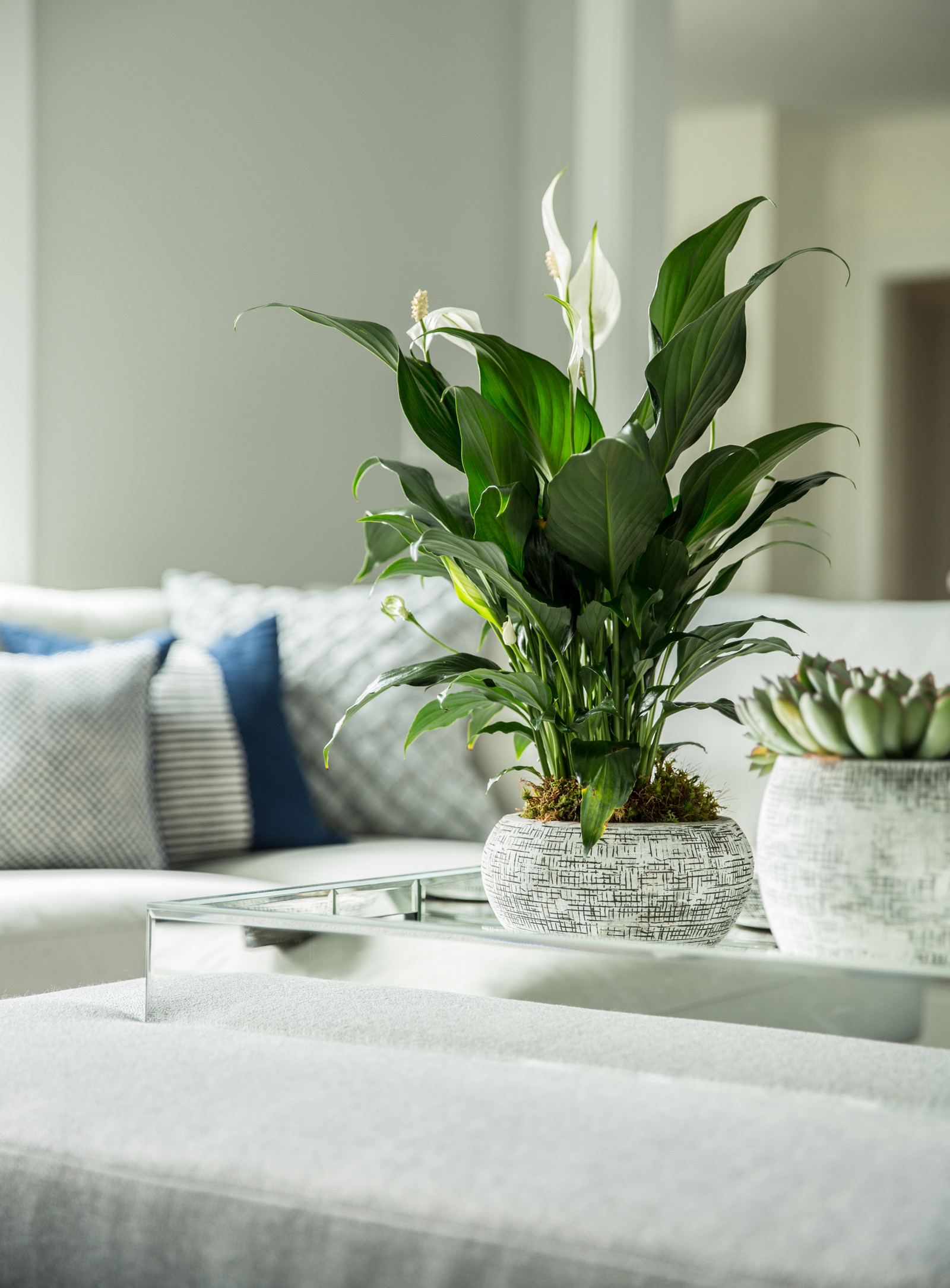 how to style a coffee table plants