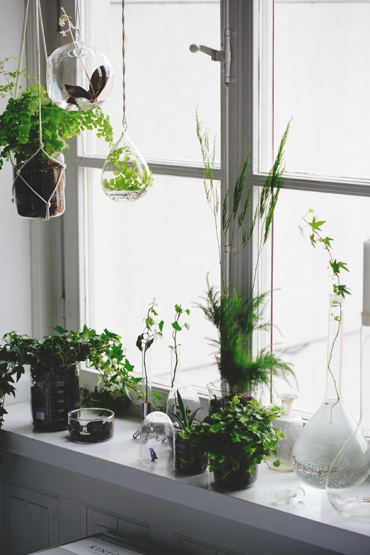 clean window plants photosynthesis winter