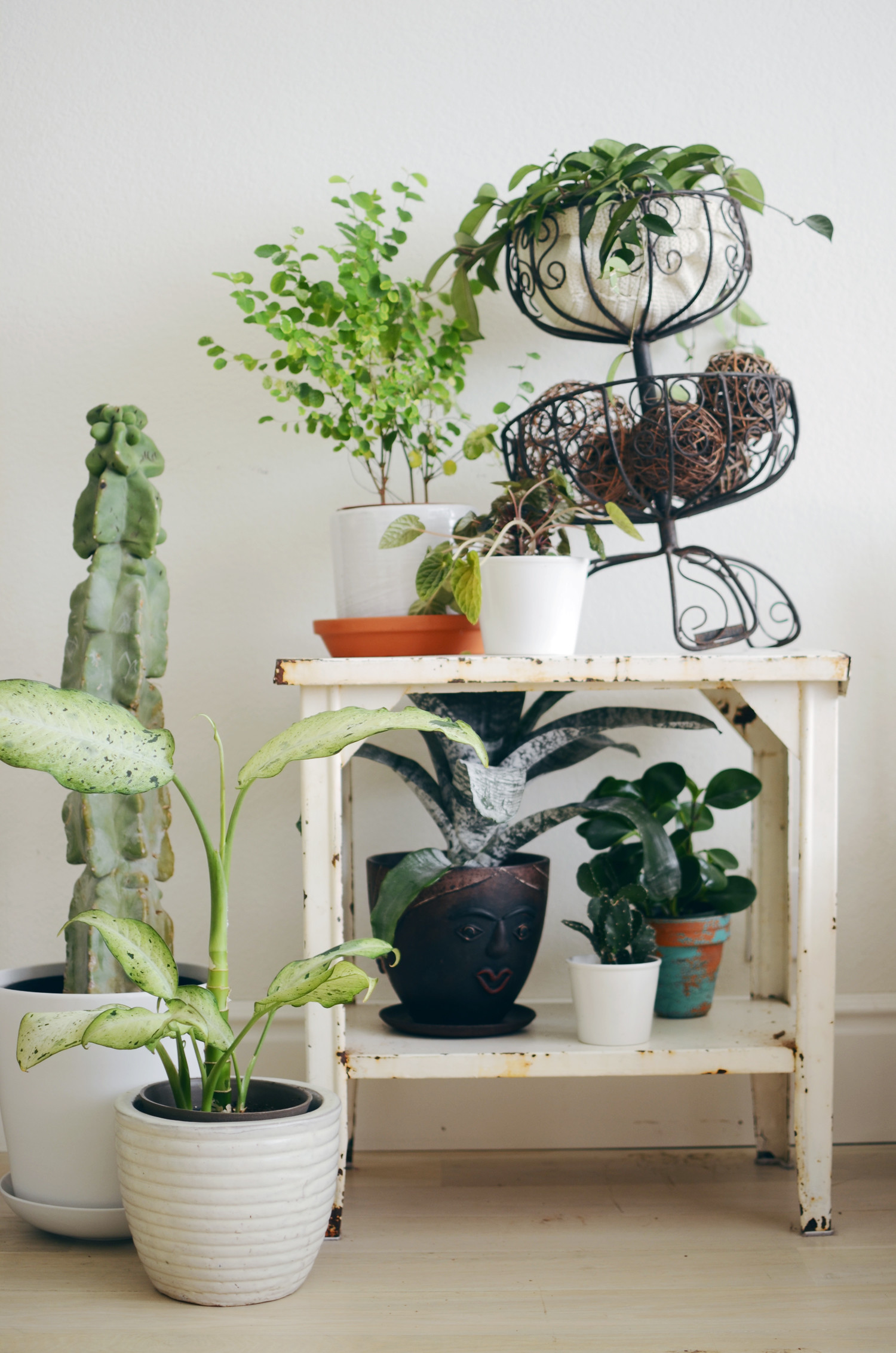 Plant temperature warm winter