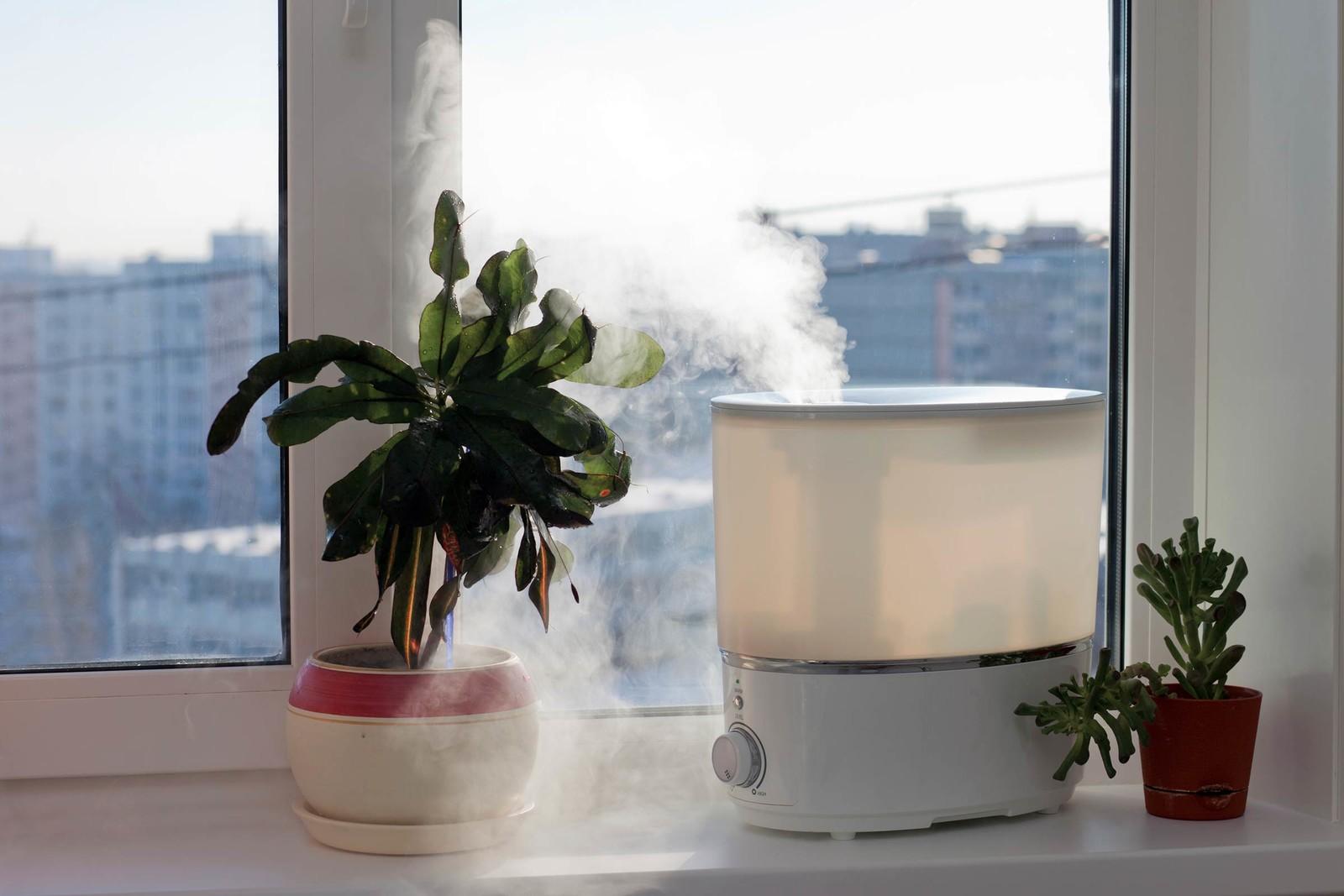 Plant moisture winter