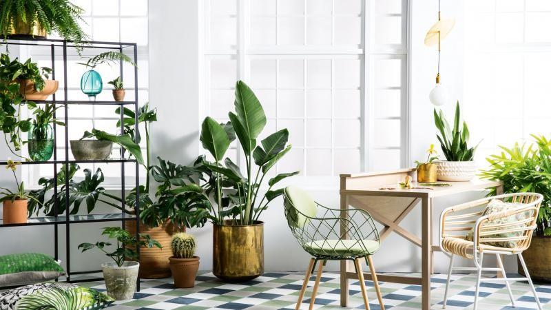 Indoor plants succulents nature