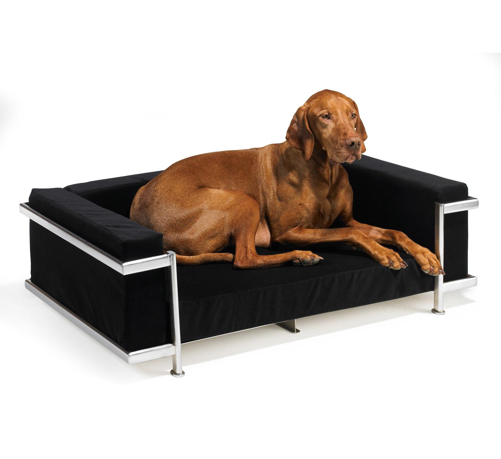 modernist dog bed steel frame