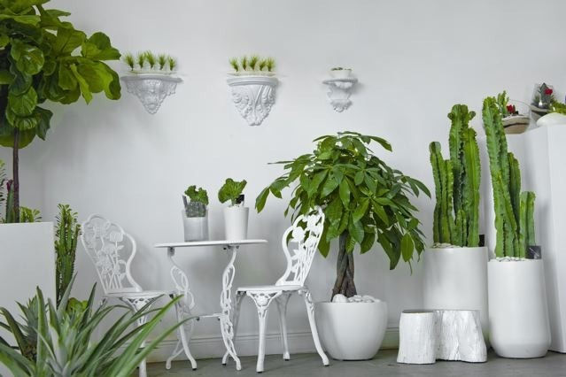 Plants Design Miami FL