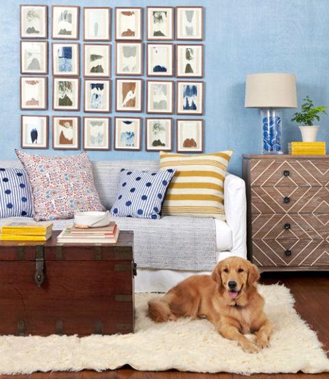 Golden retriever on shag rug in blue living room