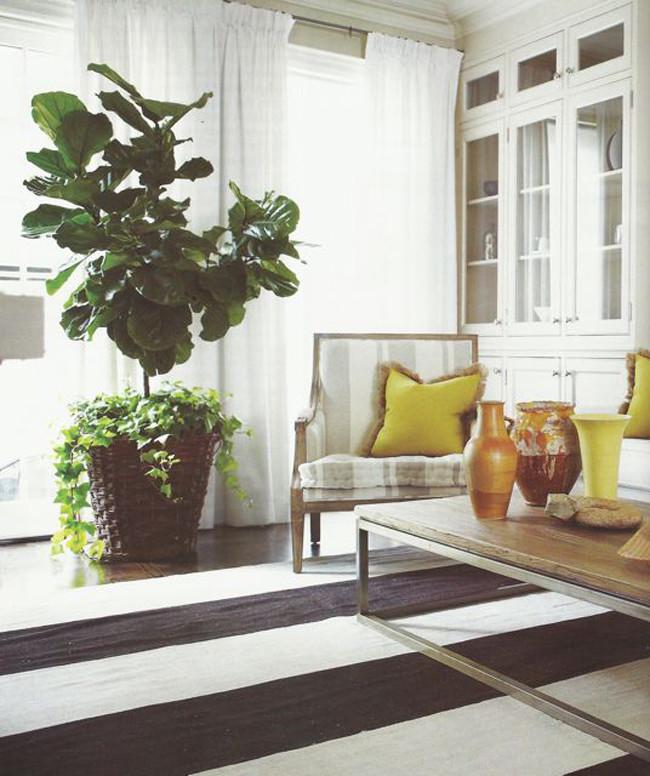 black and white striped carpet living room