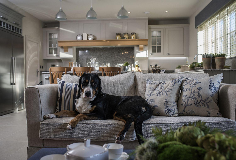 Pet Friendly Home Decoration