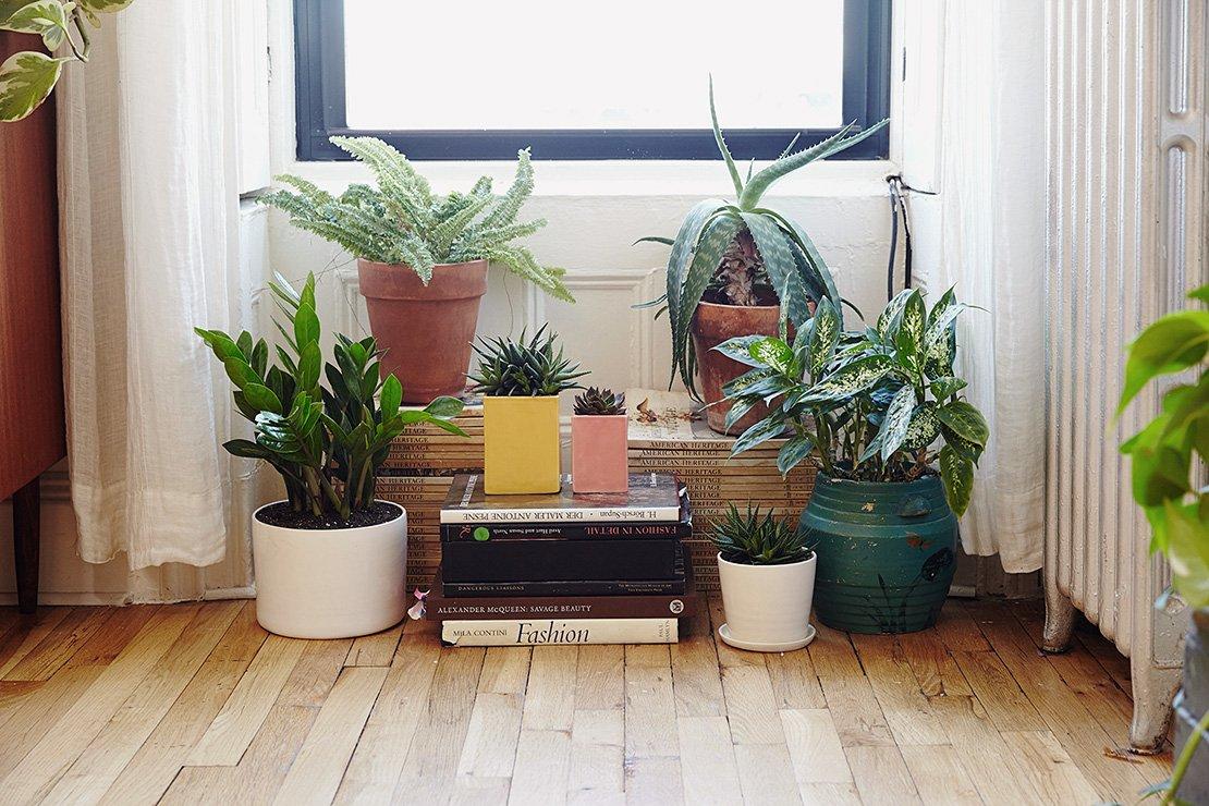 Summer Houseplants